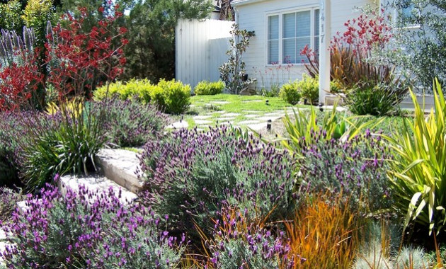 Drought tolerant garden design California