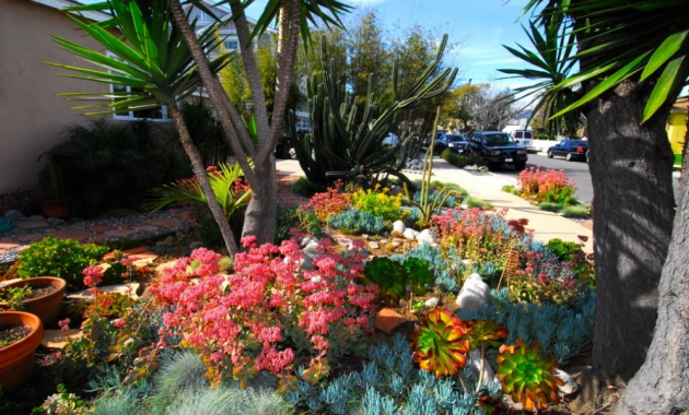 Drought tolerant landscaping companies