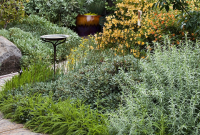 How to Design Your Garden with a California Native Plant Garden Design