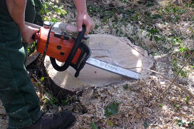 How to Use a Chainsaw to Cut Down a Tree