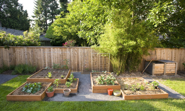 pictures of vegetable gardens in backyards